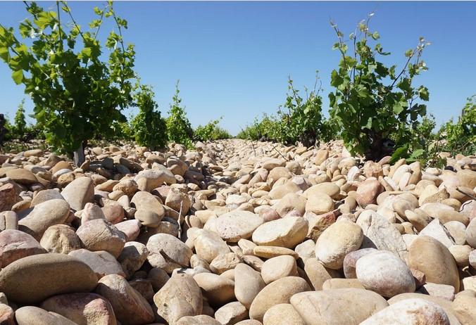 シャトーヌフ・デュ・パプ・ブラン レ・カイユ 白 アンドレ・ブルネル フランスワイン通販 日本酒ショップくるみや