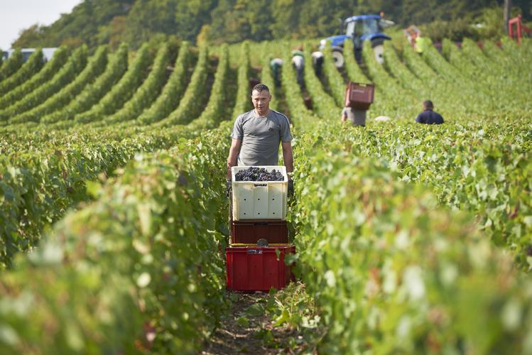 シャンパーニュ ルアレ デボルド ブリュット 白 スパークリングワイン通販 日本酒ショップくるみや