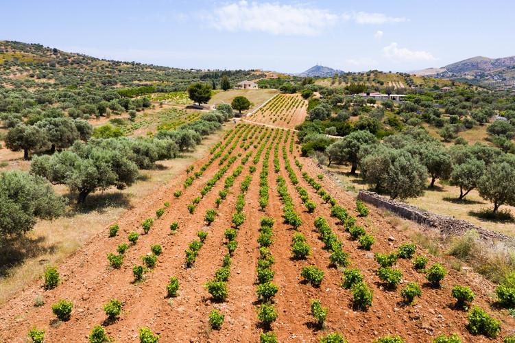 ミロナス・ワイナリー アシルティコ  白ギリシャワイン