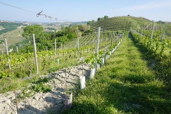 バルバレスコ・リセルヴァ 赤 アジエンダ・アグリコーラ・ロベルト・サロット ワイン通販 日本酒ショップくるみや