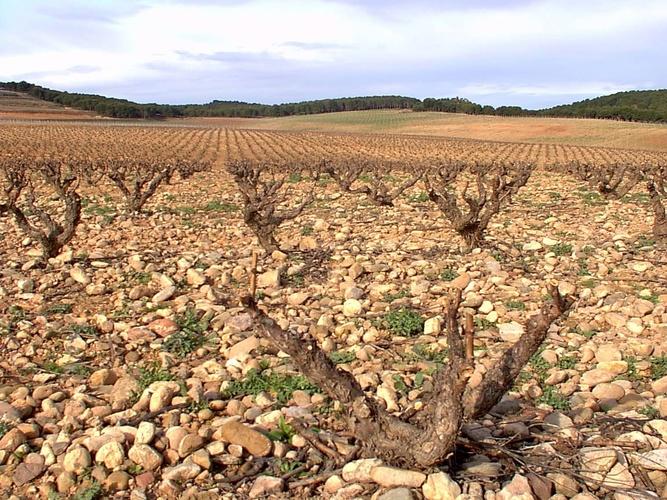 ロドリゲス・サンソ・ラス・ティエラス ヴィノ デ プエブロ 赤スペインワイン通販 日本酒ショップくるみや
