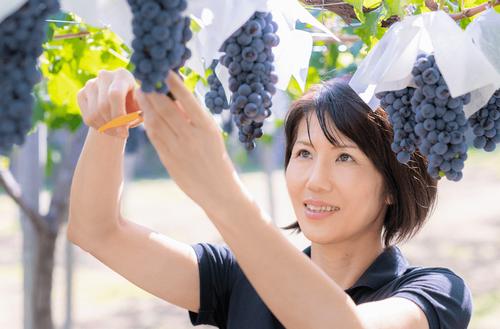 フジクレール クラノオト フジッコワイナリーの日本ワイン通販